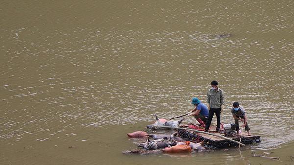 Phát hiện nhiều xác lợn và nội tạng thối rữa trôi dạt trong lòng hồ thủy điện ở Lào Cai