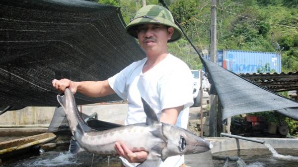 Đáng nể mô hình nuôi cá tằm, cá hồi thu 3 tỷ đồng/năm ở vùng cao Lào Cai
