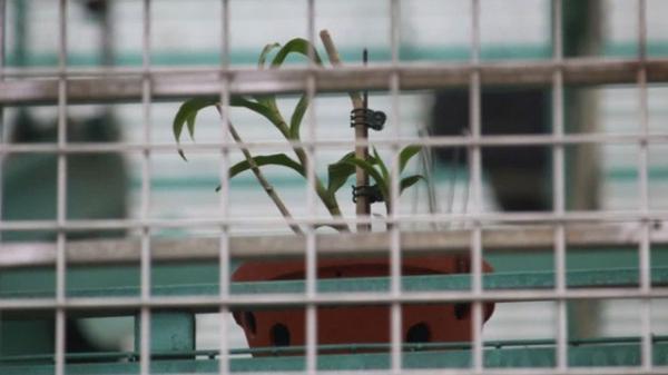 Vụ tin đồn chủ vườn lan ôm tiền người mua bỏ trốn: Số tiền bị lừa có thể lên đến 700 tỷ đồng?