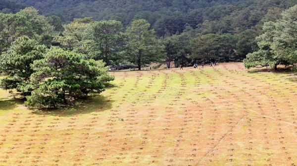 Trên 1 ha đất rừng đã bị chiếm dụng, đào xới