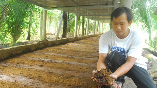 Tiền Giang: Khởi nghiệp bằng nuôi trùn quế