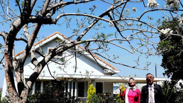 Cây Phượng trắng Úc thứ 2 được trồng ở Đà Lạt