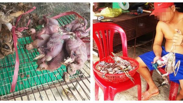 Cận cảnh chim trời được bày bán, gi.ết hại tại chợ chim tại đoạn đường ở huyện Thạnh Hoá, Long An