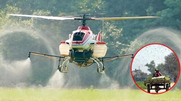 Sẽ dùng máy bay phun thuốc diệt châu chấu xâm nhập Việt Nam