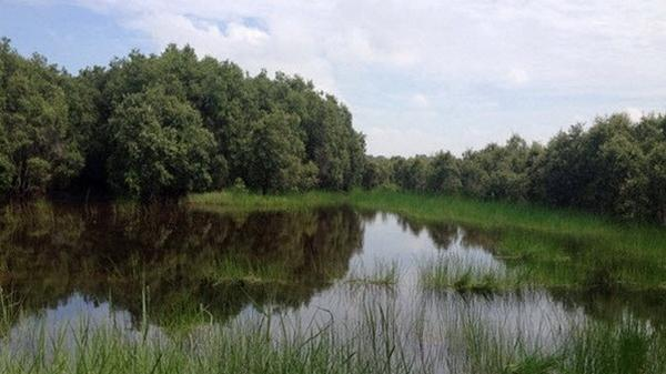 Long An: Thành lập rừng đặc dụng Khu Bảo tồn Đất ngập nước Láng Sen