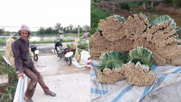 Bác nông dân miền Tây dầm mưa thu hoạch sả tặng Sài Gòn, nhìn cách sắp xếp càng thêm xúc động