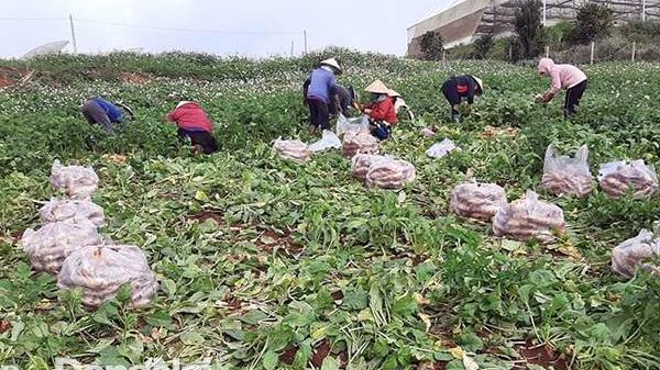 Nông dân tỉnh Lâm Đồng hỗ trợ gần 7 tấn rau cho công nhân Đồng Nai