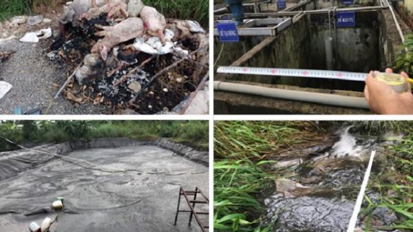 Đồng Nai: Bắt quả tang 2 trại heo xả thải trực tiếp ra môi trường
