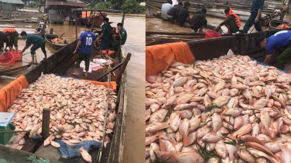 Mưa lớn gây thiệt hại hơn 700 tấn cá nuôi trên sông Đồng Nai