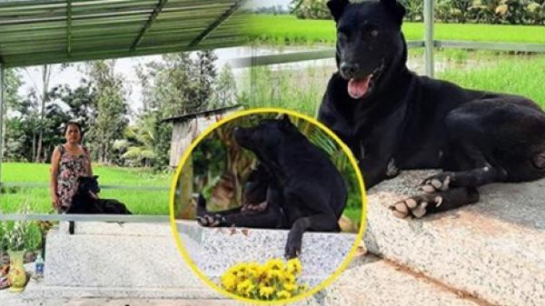 Thương chú chó 3 năm nằm bên mộ cậu chủ, gia đình xây mái che nắng, che mưa