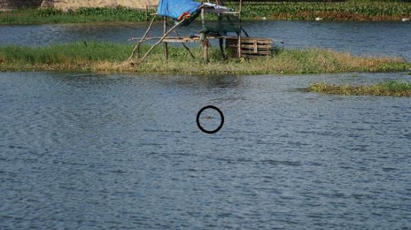 Cá sấu 'đi lạc' ở hồ Vũng Tàu: 15 phút nổi lên 3 lần