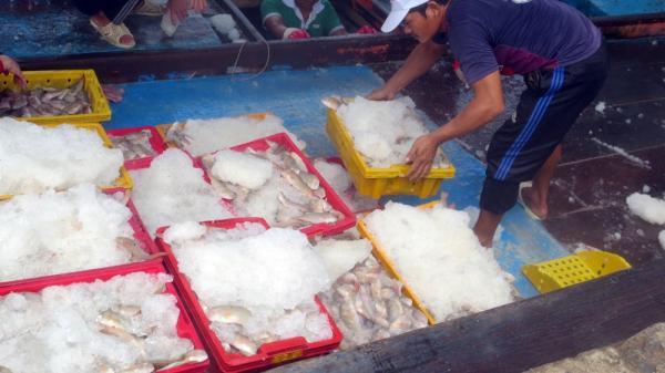 Bà Rịa - Vũng Tàu: Đánh bắt thủy sản trái phép còn diễn biến phức tạp