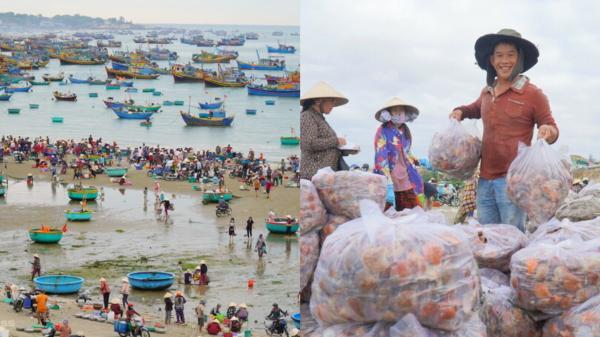 Ngư dân Mũi Né trúng sò điệp