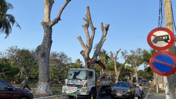 Vũng Tàu: Chặt 50 cây xanh để thi công đường Thống Nhất