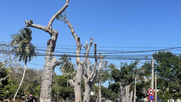 Người dân Vũng Tàu tiếc nuối nhìn hàng cây cổ thụ bị chặt hạ