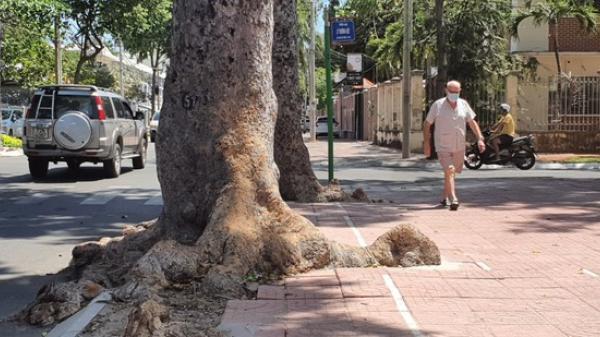 Lãnh đạo TP Vũng Tàu nói về việc chặt 51 cây làm đường