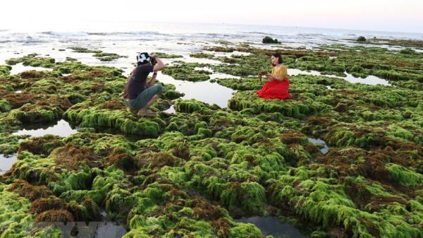 Khám phá cánh đồng rong biển tuyệt đẹp ở Ninh Thuận