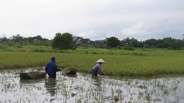 Nam Định: Chất vấn 'căng' chuyện mất mùa, ngập lụt