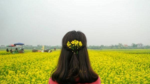Cần gì phải đi đâu xa khi ngay gần Nam Định cũng có cánh đồng cải vàng đẹp rực rỡ thế này!