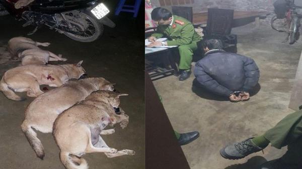 Bắt trộm gần 1 tạ chó bị người dân tóm gọn