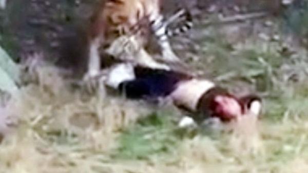 Trèo hàng rào trốn vé vào xem sở thú, người đàn ông bị hổ vồ chết thảm