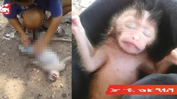 Thấy con khỉ bị ô tô đâm chết, cô gái bất ngờ mổ bụng nó và câu chuyện xúc động đằng sau
