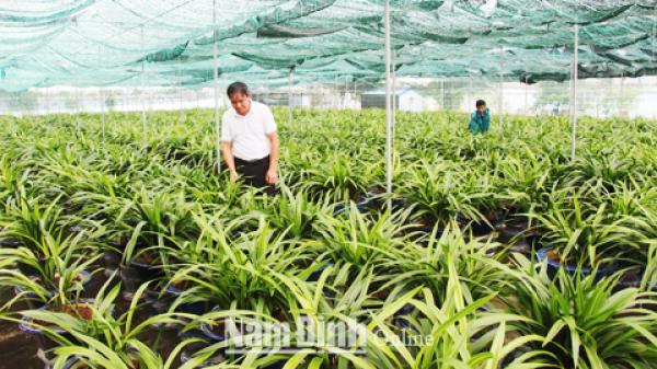Nam Định: Chuyện về vườn địa lan Hoàng vũ tư nhân lớn nhất nước