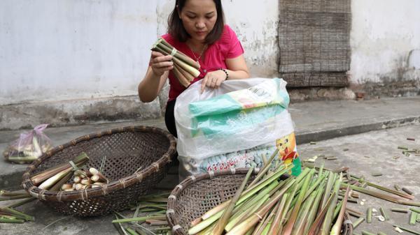 Vào mùa niễng, người dân Nam Định nô nức thu hoạch củ, thu lãi hàng trăm triệu đồng