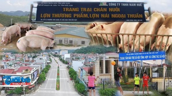 Bắc Kạn: Trang trại lợn 5,6 ha trong lòng thành phố, người dân khốn k hổ!