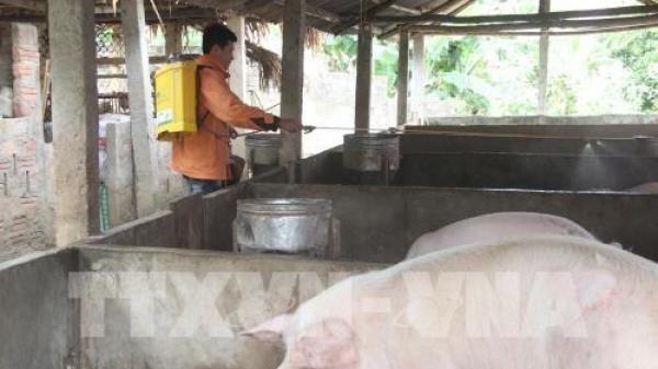 Nam Định: KHẨN CẤP ngăn dịch l.ở mồm long móng lan rộng