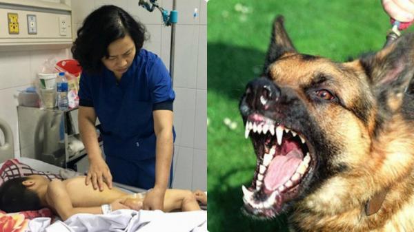 Bé trai 9 tuổi bại não bị 4 con chó của nhà trèo lên giường c.ắn đ.ứt vùng kín, chỉ còn 1cm