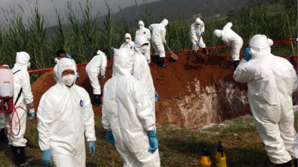 CẤP BÁO: Phát hiện cúm gia cầm A/H5N6 CỰC NGUY HIỂM ở Thái Bình