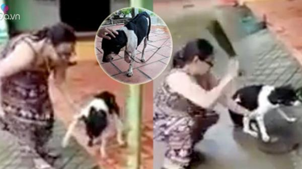 """Lời phân trần của người phụ nữ cầm dao chặt chân chó: """"Dì cần cứu người mà"""""""