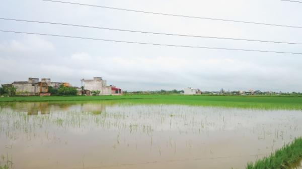 Đi thăm lúa, người phụ nữ trượt chân bị cuốn mất tích theo dòng nước lũ