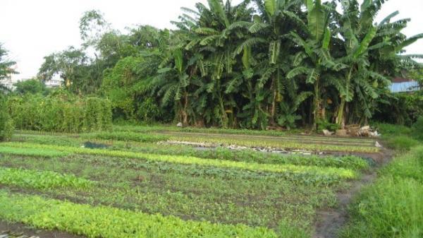 Trình tự, thủ tục chuyển đất nông nghiệp sang đất thổ cư