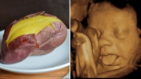 Mỗi ngày, mẹ bầu ăn 1 củ khoai lang vào thời điểm vàng này, thai nhi NO NÊ, SUNG SƯỚNG, vượt chuẩn cả chiều cao lẫn cân nặng