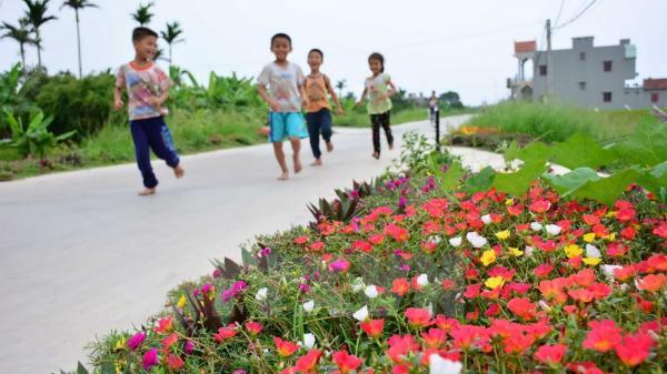Những con đường hoa đẹp đến ngỡ ngàng ở làng quê Nam Định