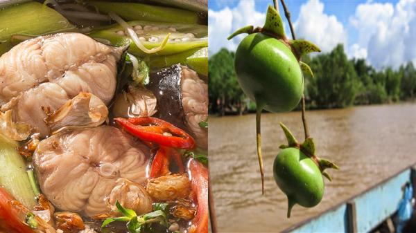 CÁ NGÁT NẤU BẦN: Món ngon đậm chất quê hương miền Tây và mang vị đặc sản