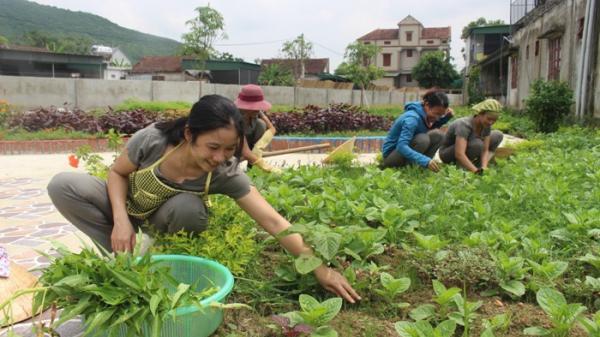 """Chuyện cổ tích về """"vườn sau nhân ái"""" ở trường mầm non Yên Lộc, Hà Tĩnh"""