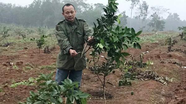 Nghệ An: Trang trại cam bị đ.ốt ph.á lúc đêm tối