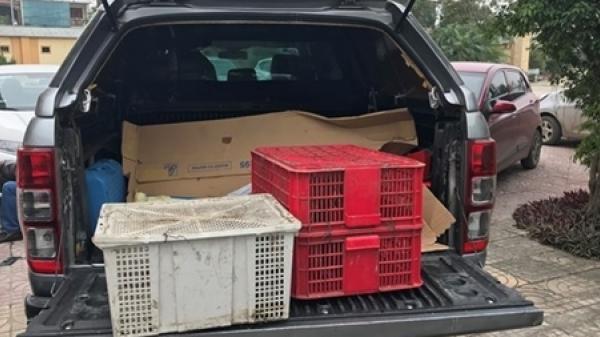 Nghệ An: Bắt quả tang 4 đối tượng mua bán động vật hoang dã trái phép