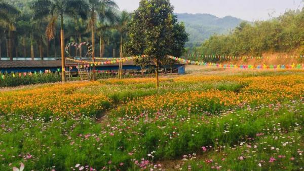 Cánh đồng hoa Cánh bướm, T.úy điệp thu hút du khách đến với Nghĩa Đàn (Nghệ An)