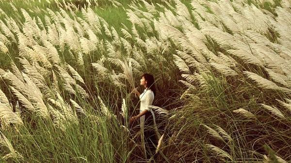 Về xứ Nghệ chiêm ngưỡng đồng cỏ lau trắng muốt bên dòng sông Lam