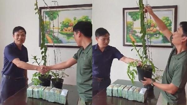 Tiết lộ đại gia Hà Tĩnh mua 2 chậu lan 3,5 tỷ