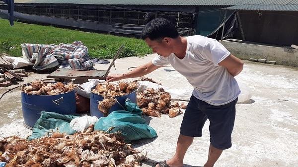 Truy tìm nhóm người nghi ném đá làm chết 1.200 con gà ở Hà Tĩnh ngay trong đêm