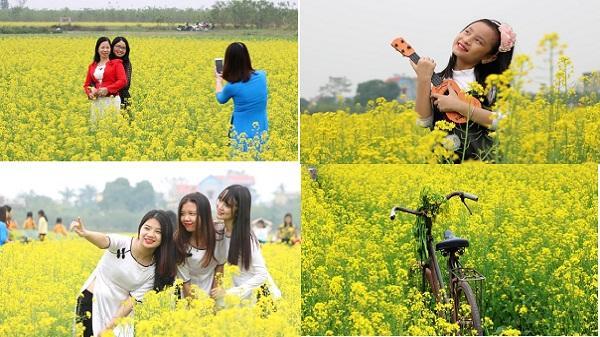 Quên tam giác mạch đi, có một cánh đồng hoa cải vàng bất tận ở không xa Ninh Bình đang chờ bạn đến khám phá