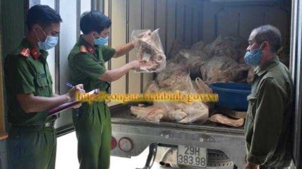 Ninh Bình: 3 ngày bắt gần 1,5 tấn thịt lợn bẩn