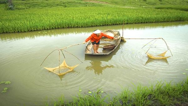 Vó tép trên sông quê
