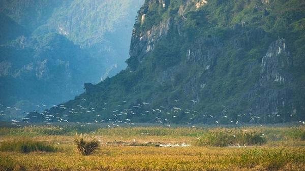 """Vân Long-Ninh Bình: Đẹp như chốn """"bồng lai"""" mùa chim bay về"""