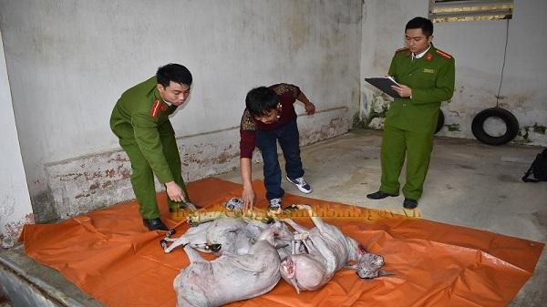 Công an Gia Viễn: Bắt quả tang đối tượng vận chuyển 175 kg thịt dê không có giấy kiểm dịch